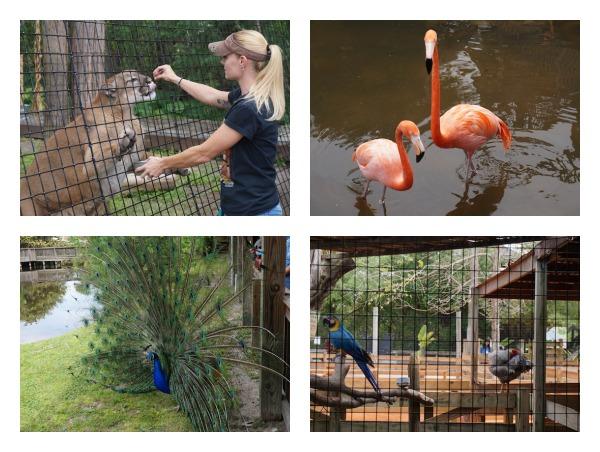 gatorland animals