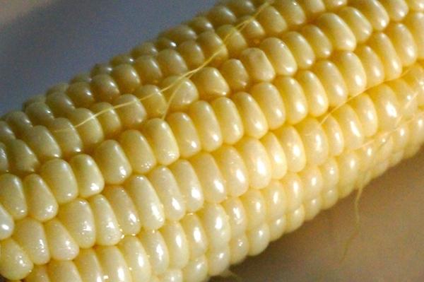 amaize corn 2