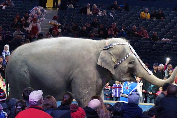 ringling bros barnum bailey circus 3
