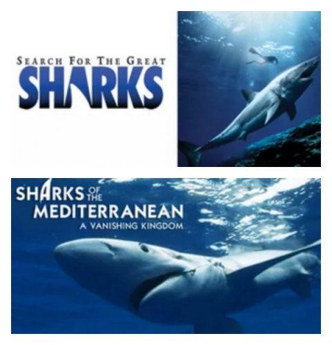 netflix shark 3