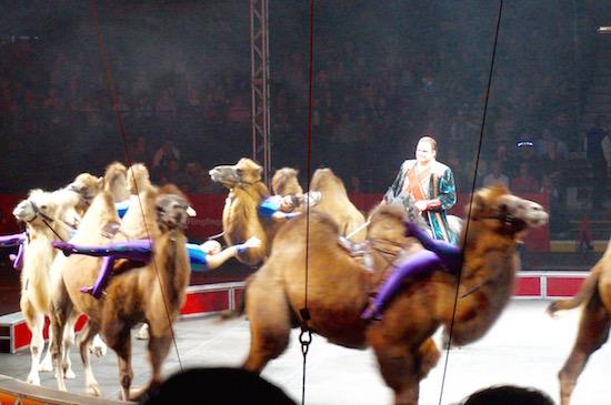 ringling circus xtreme 10