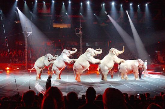ringling circus xtreme 14