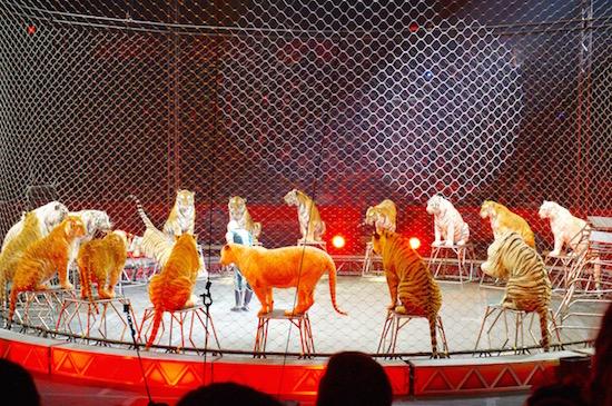 ringling circus xtreme 19