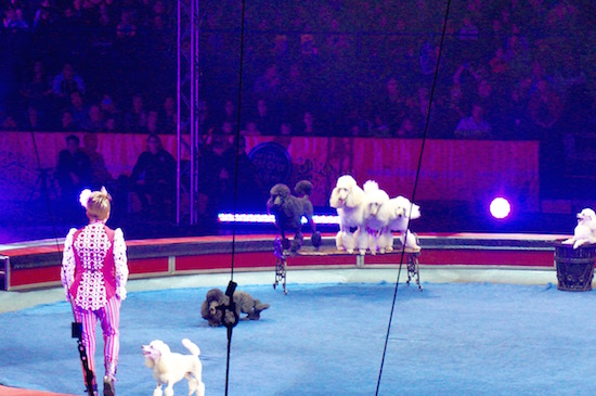 ringling circus xtreme 20