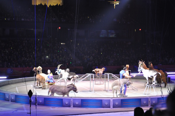 ringling-bros-out-of-world-7