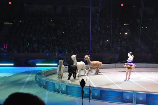 ringling-bros-out-of-world-8