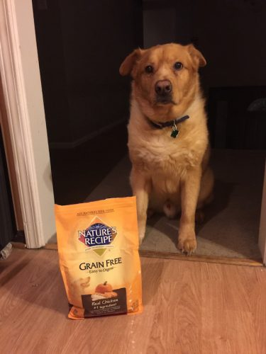 Every Ingredient Counts With Nature's Recipe All Natural Dog Food