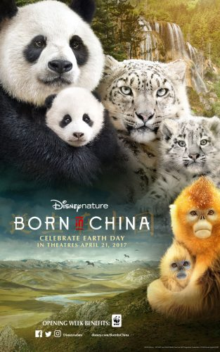 "Disneynature ""Born in China"" Surprised Me #EarthDay #BornInChina #DisneySMMC"