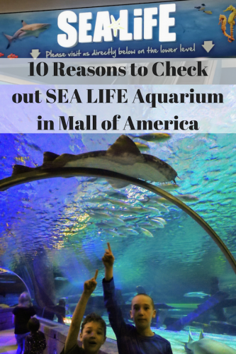 10 Reasons to Check out SEA LIFE Aquarium in Mall of America
