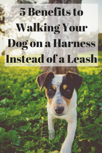 5 Benefits to Walking Your Dog on a Harness Instead of a Leash