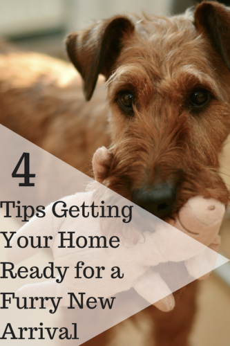 4 Tips Getting Your Home Ready for a Furry New Arrival