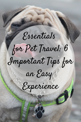 Essentials for Pet Travel: 6 Important Tips for an Easy Experience