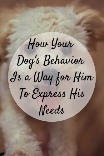 How Your Dog's Behavior Is a Way for Him To Express His Needs