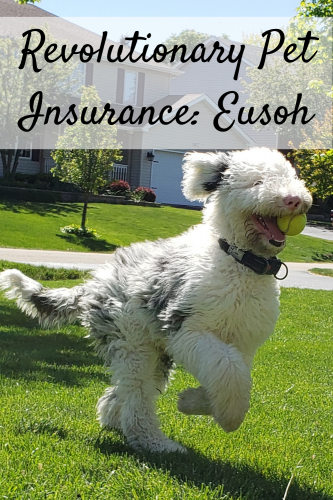 Revolutionary Pet Insurance: Eusoh