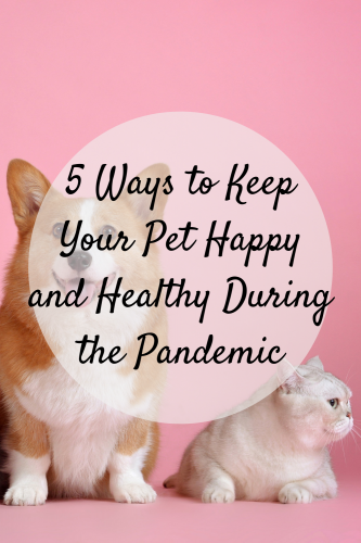 5 Ways to Keep Your Pet Happy and Healthy During the Pandemic