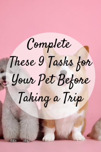 Complete These 9 Tasks for Your Pet Before Taking a Trip