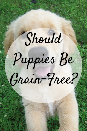 Should Puppies Be Grain-Free?