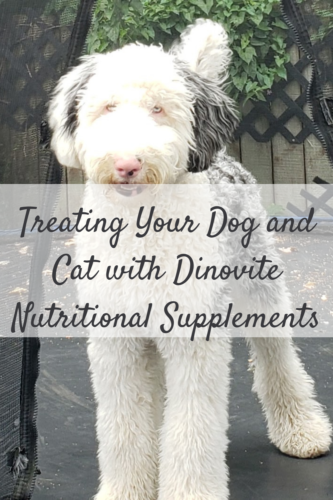 Treating Your Dog and Cat with Dinovite Nutritional Supplements